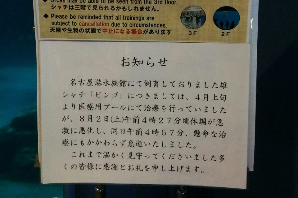名古屋港水族館 シャチのビンゴ訃報
