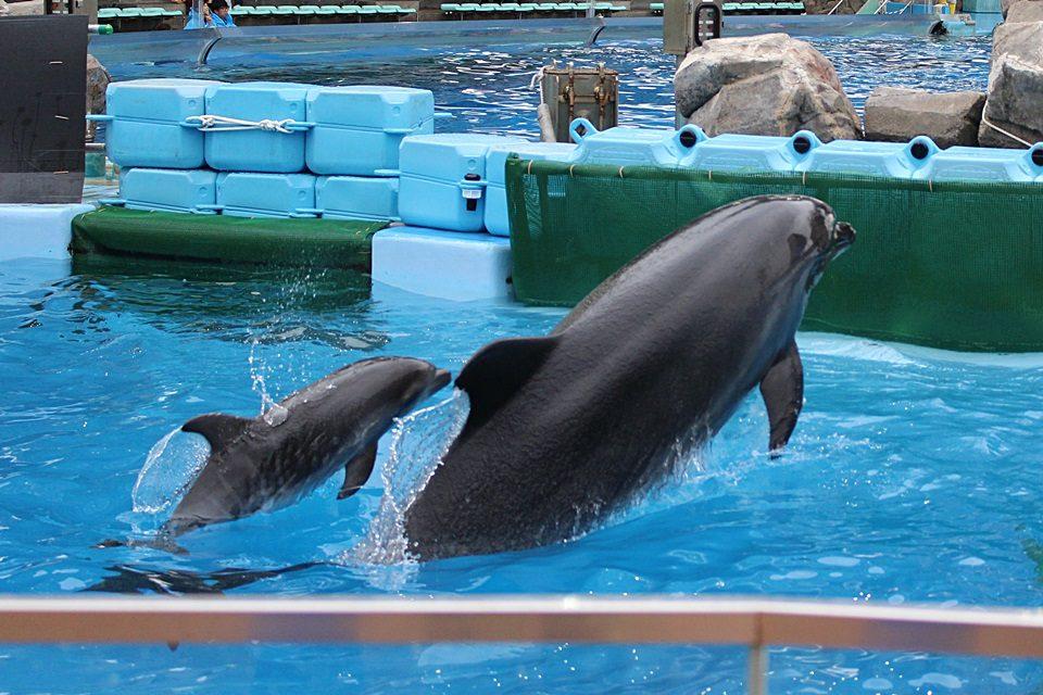 母イルカのココと赤ちゃん