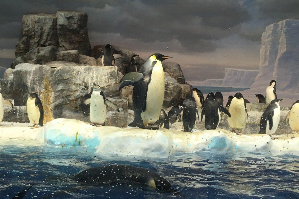 iPhone6で撮ったペンギン