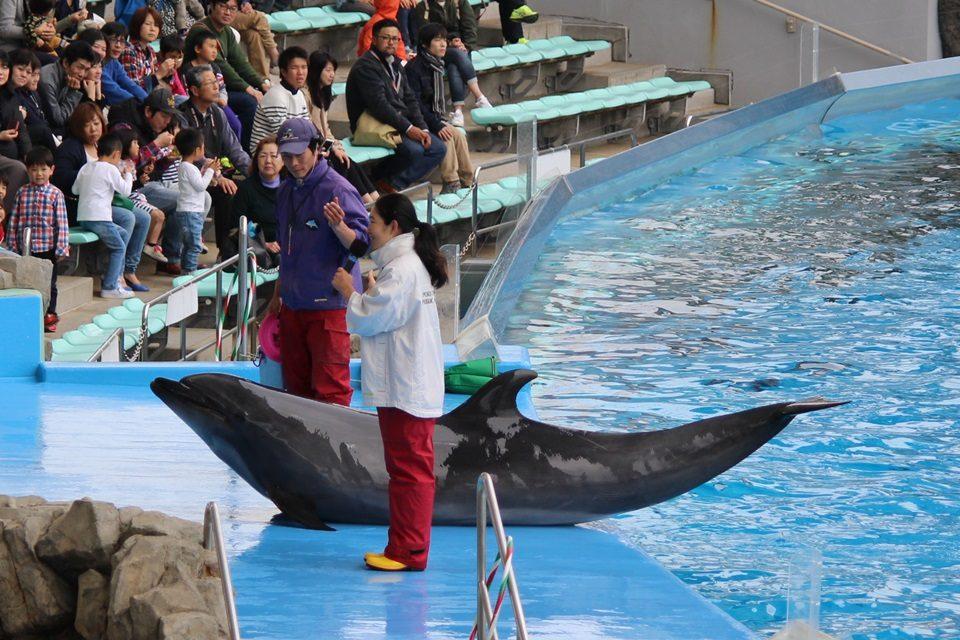 名古屋港水族館のバンドウイルカ