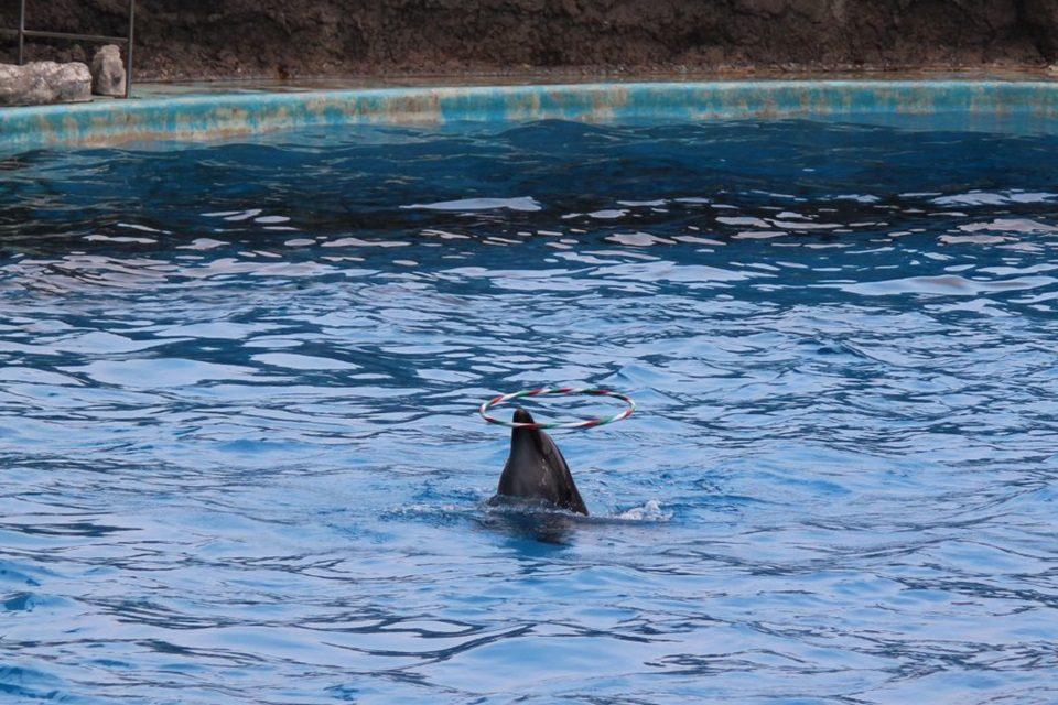 イルカ フラループ