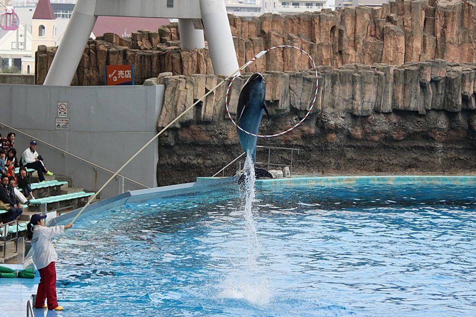 イルカ 輪くぐりジャンプ