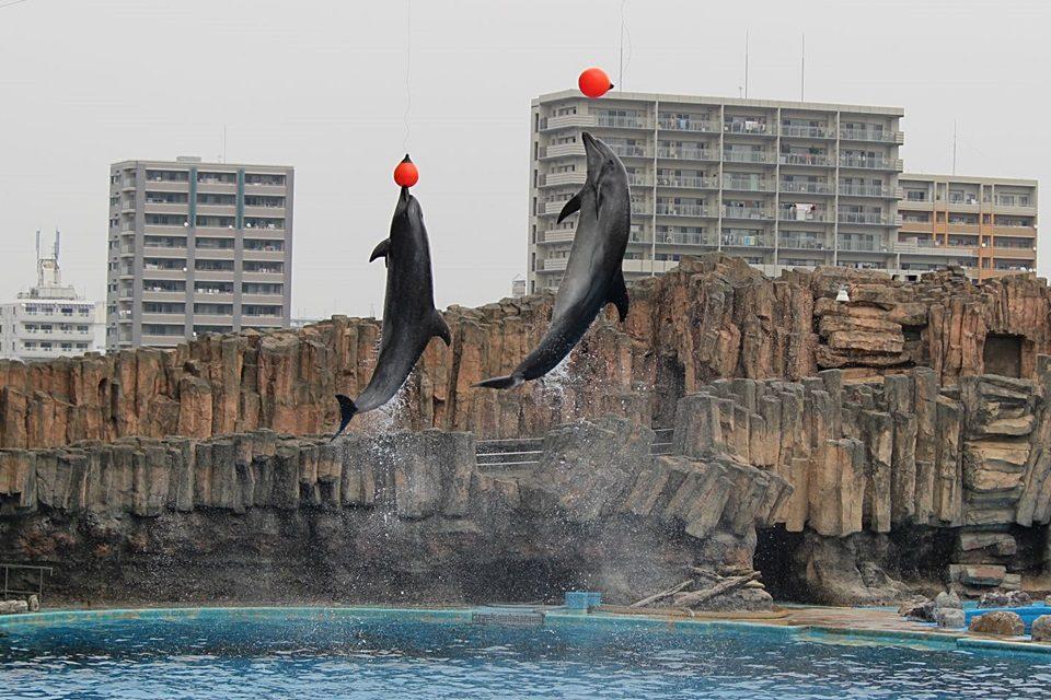 イルカ ダブルジャンプ