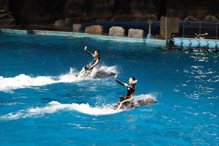 イルカ ナイトパフォーマンス