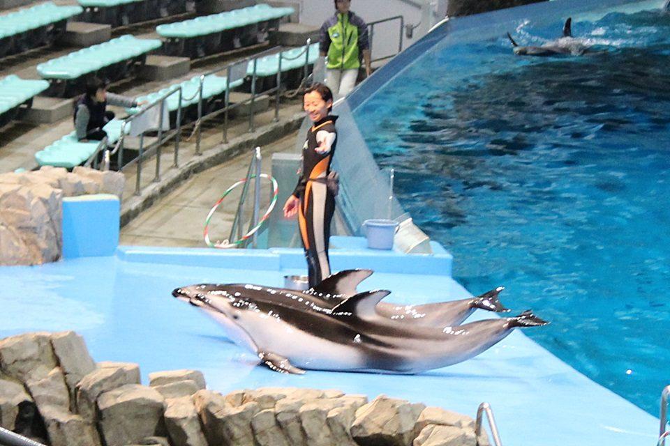 名古屋港水族館のカマイルカ