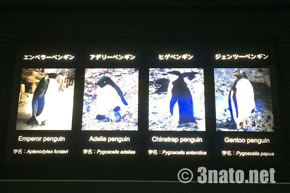 4種類のペンギン