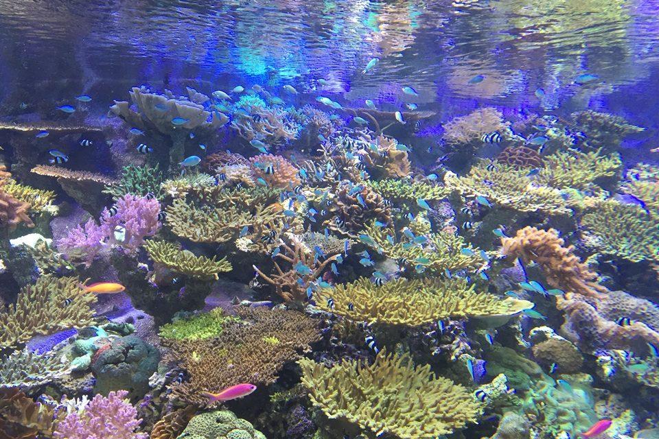 生体サンゴ水槽