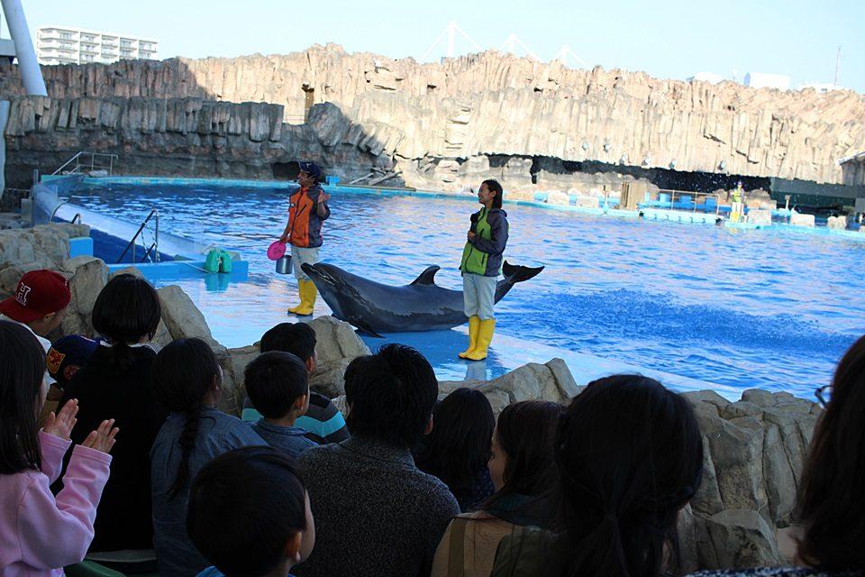 名古屋港水族館 イルカパフォーマンスショー