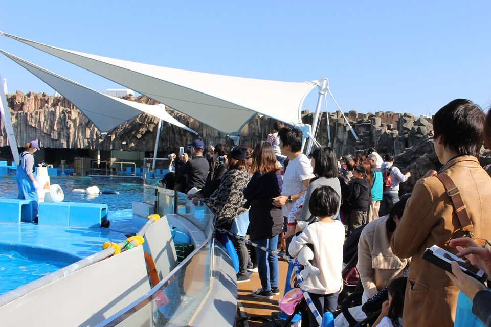 名古屋港水族館 シャチプール