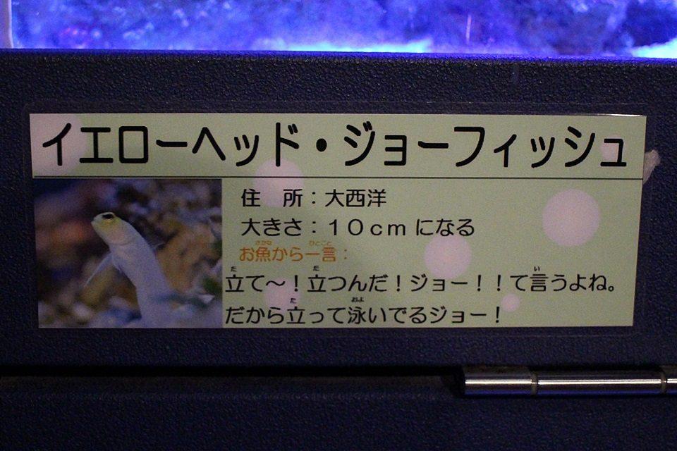 竹島水族館 キャプション