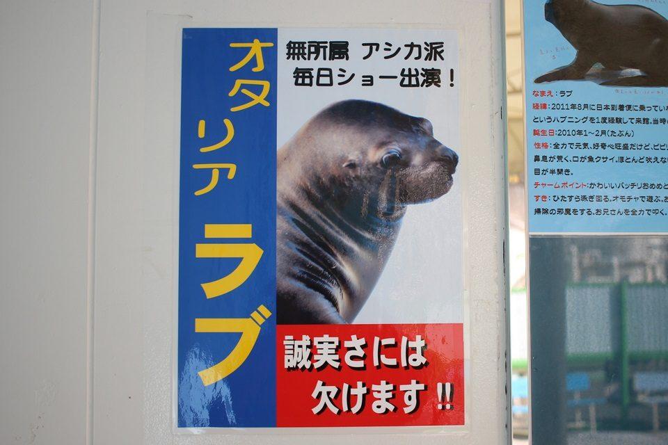 竹島水族館 オタリア ラブちゃん