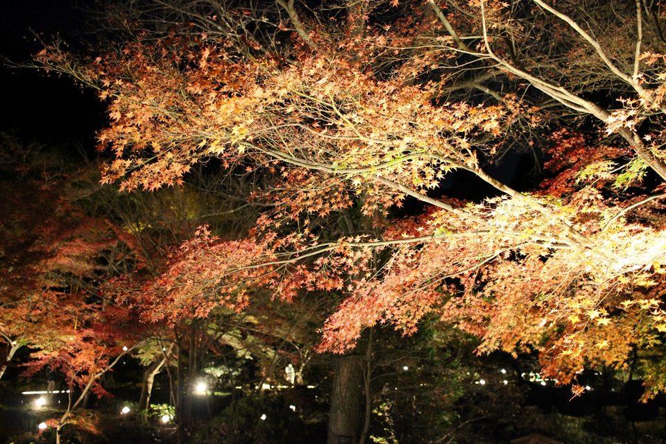 東山動植物園 紅葉ライトアップ