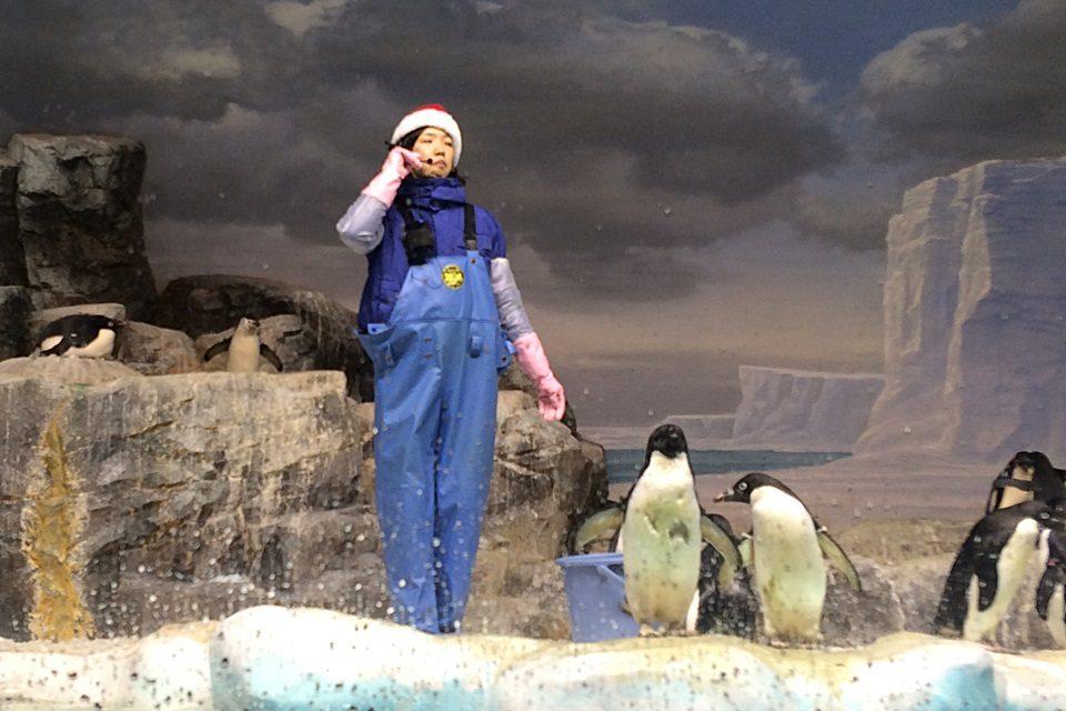 名古屋港水族館 ペンギン水槽(撮影日:2014年12月)