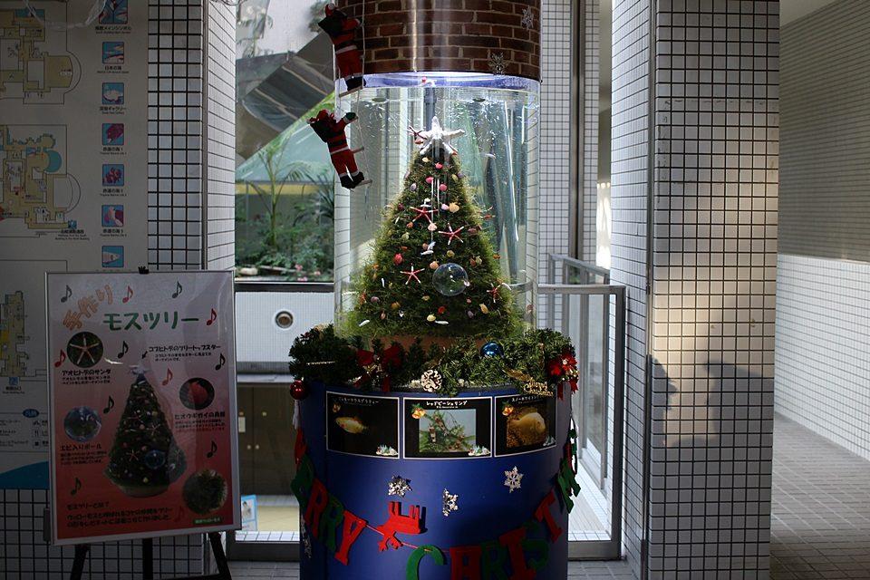 名古屋港水族館 クリスマス水槽
