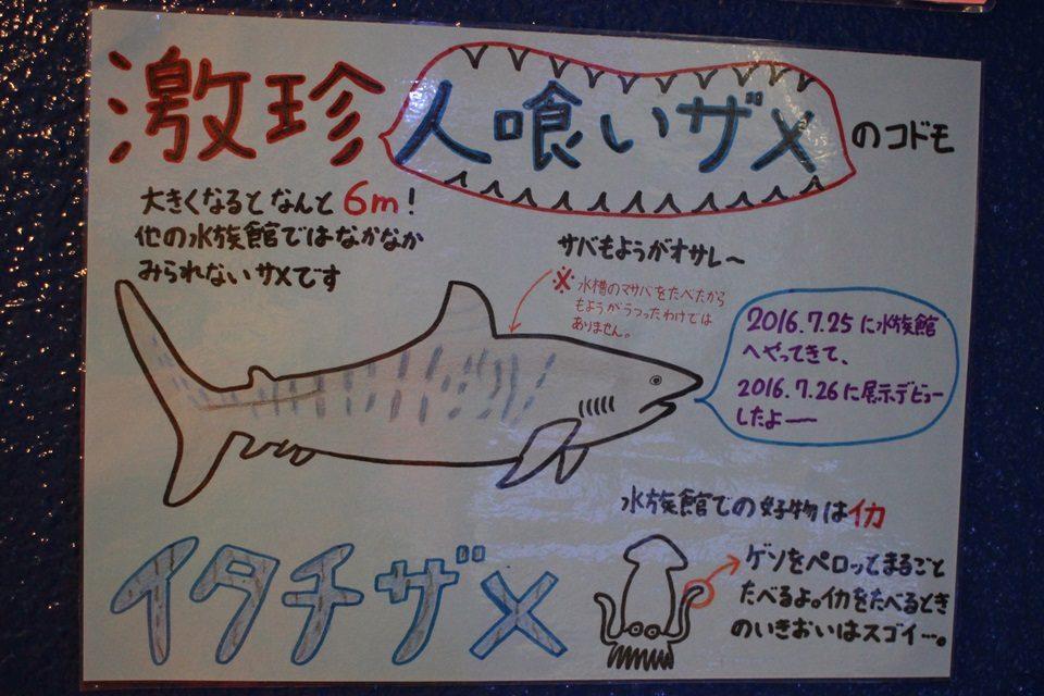 竹島水族館 激珍人喰いザメ