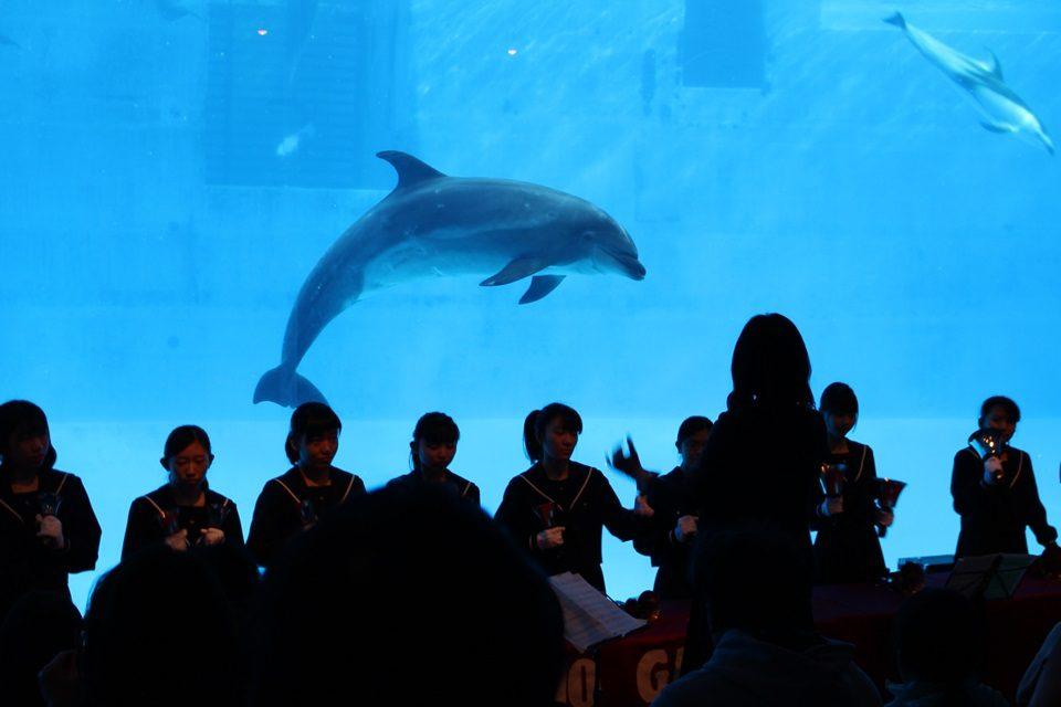 名古屋港水族館 クリスマスアクアリウムコンサート