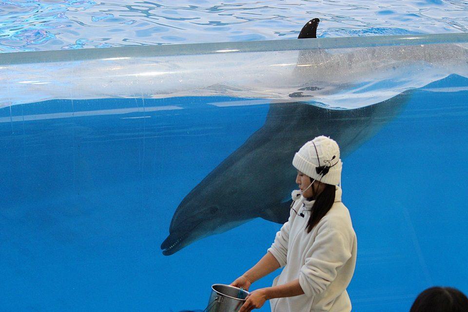 名古屋港水族館 イルカパフォーマンス