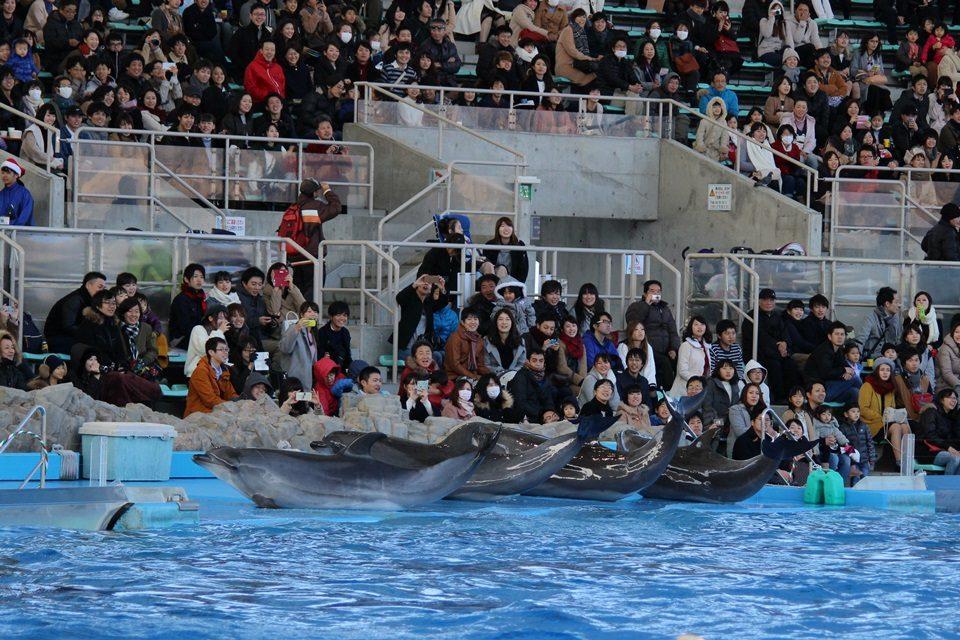 名古屋港水族館 メインプールステージ