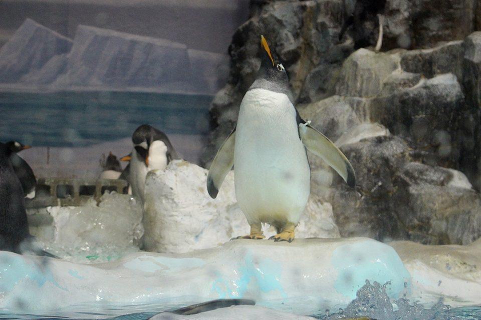 名古屋港水族館 ペンギン水槽