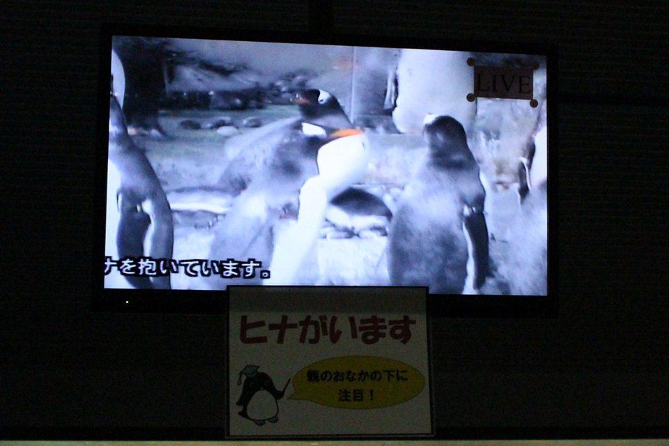 名古屋港水族館 ペンギン水槽前モニター