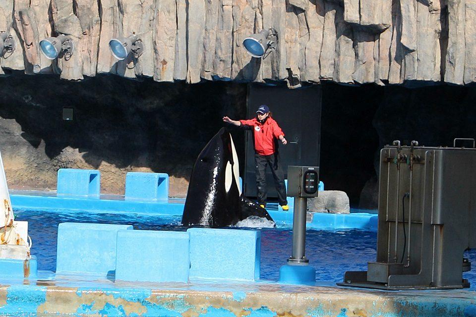 名古屋港水族館 シャチのアース