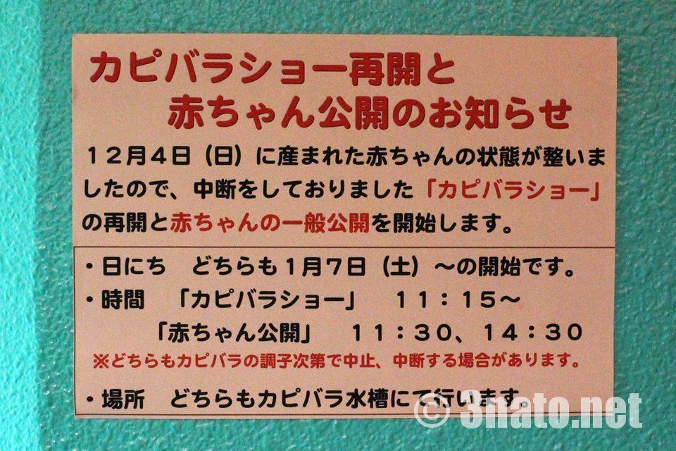 竹島水族館 カピバラショー案内
