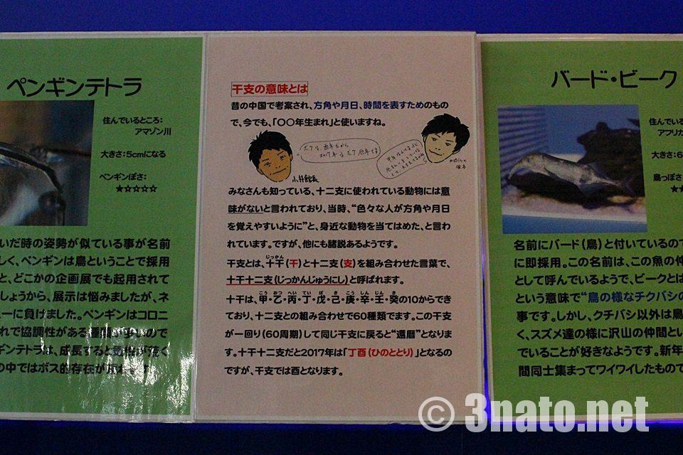 竹島水族館 干支解説