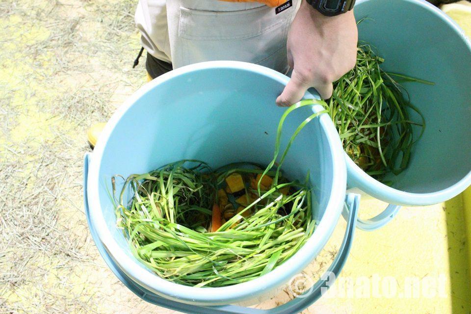 竹島水族館 カピバラの餌