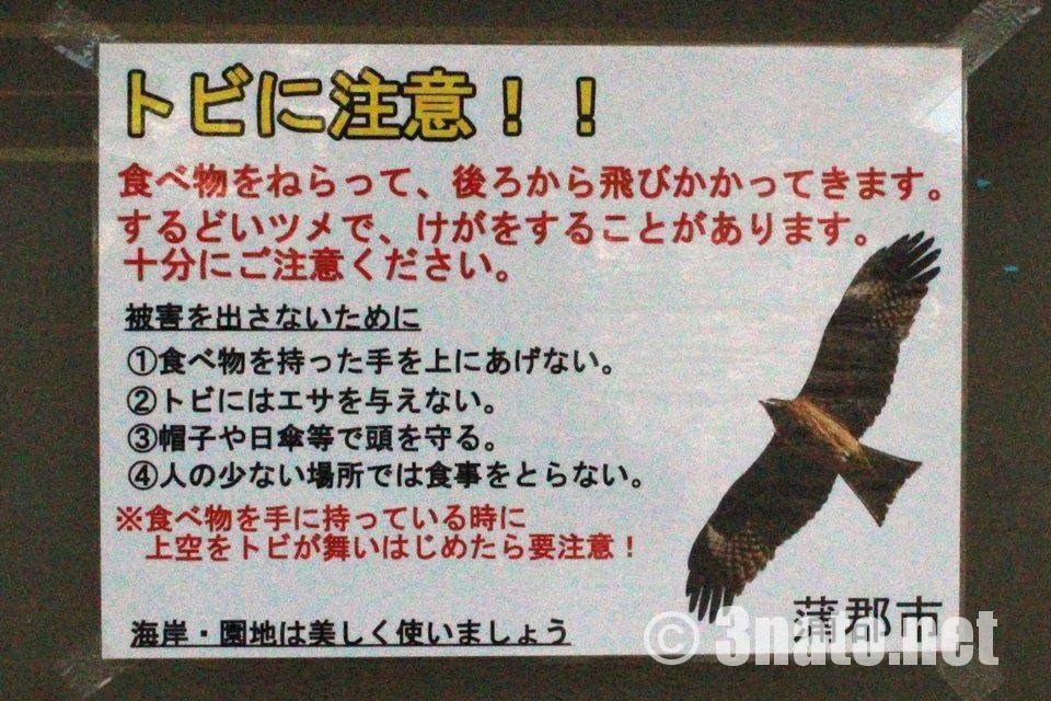 竹島周辺でのトビに注意
