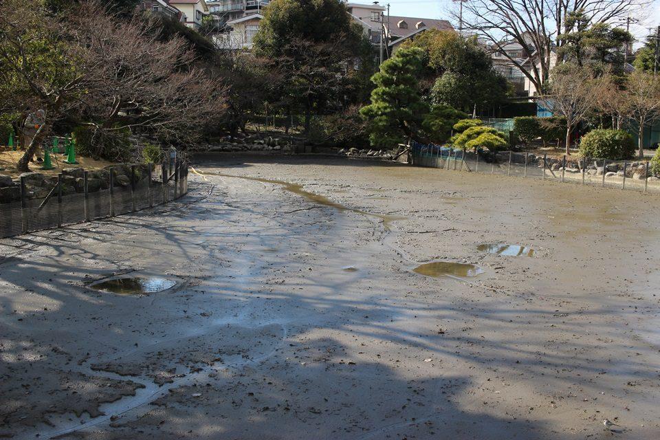東山動物園 水が抜かれた池