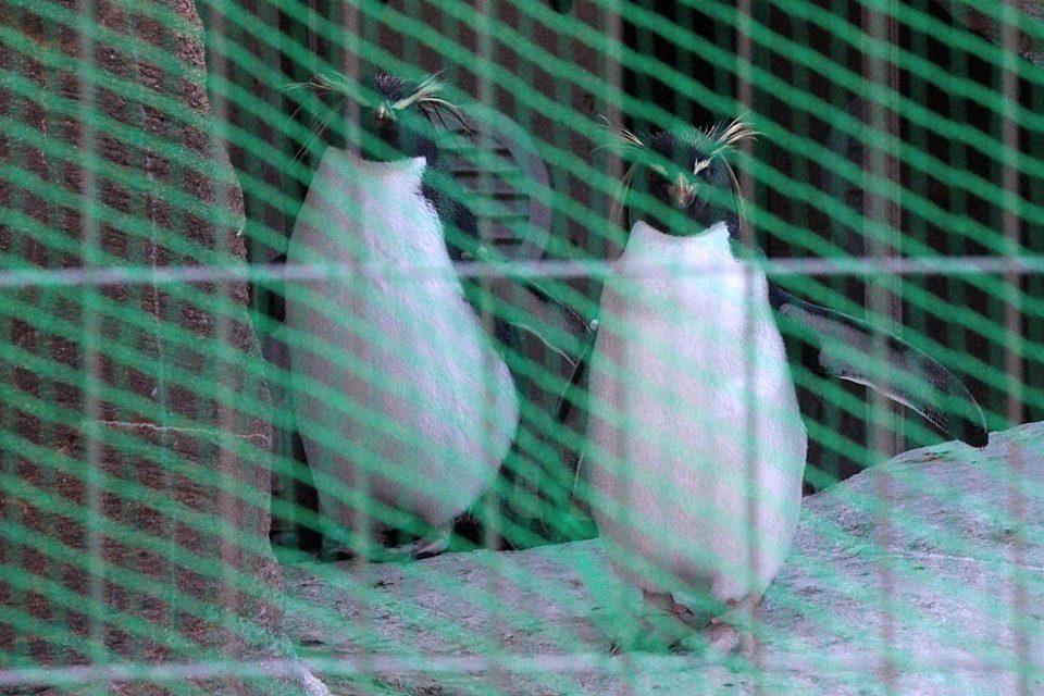 東山動物園 ネットの張られたペンギン舎