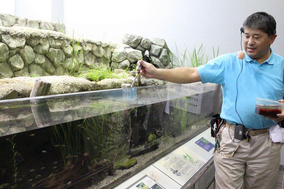 東山動物園 メダカ館