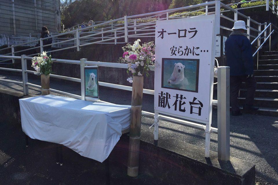東山動物園 シロクマのオーロラ献花台