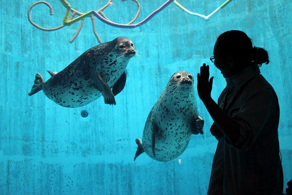 名古屋港水族館 ゴマフアザラシのアラシ♂ナノハ♀
