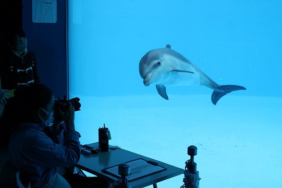 名古屋港水族館 ココの赤ちゃんイルカ