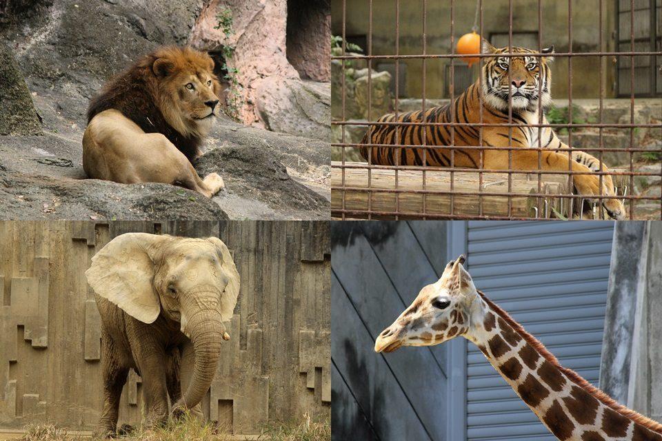 東山動物園 動物たち