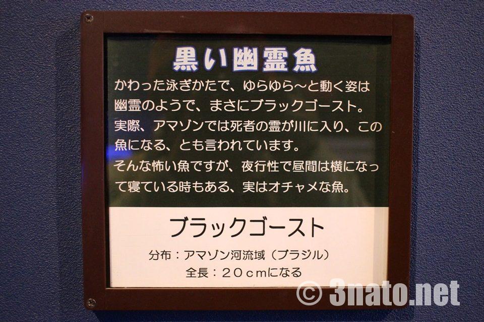 ブラックゴースト 竹島水族館の解説