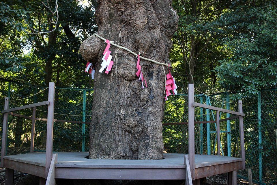 恋の三社めぐり 連理木