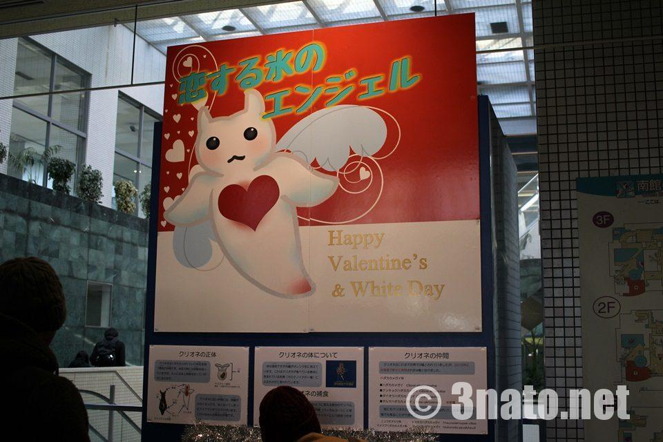名古屋港水族館 バレンタイン企画 特別展示水槽
