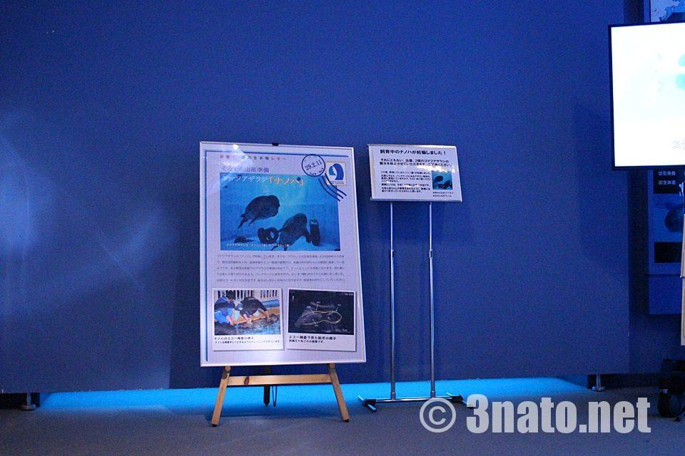 名古屋港水族館 ゴマフアザラシ水槽