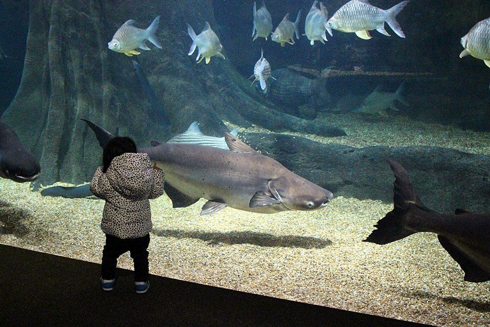 世界淡水魚園水族館 アクア・トトぎふ
