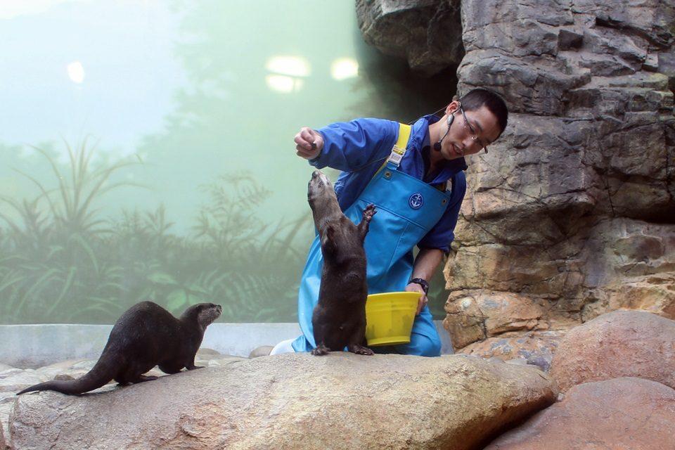 世界淡水魚園水族館 アクア・トトぎふ コツメカワウソ
