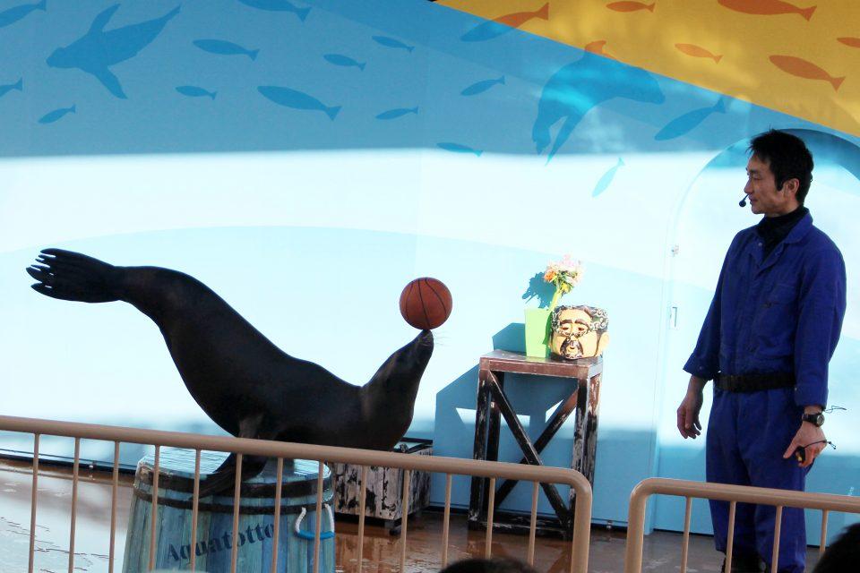 世界淡水魚園水族館 アクア・トトぎふ アシカショー