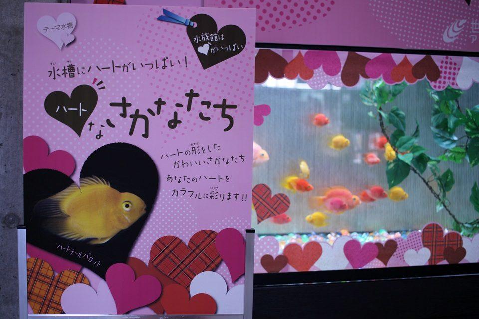 世界淡水魚園水族館 アクア・トトぎふ テーマ水槽