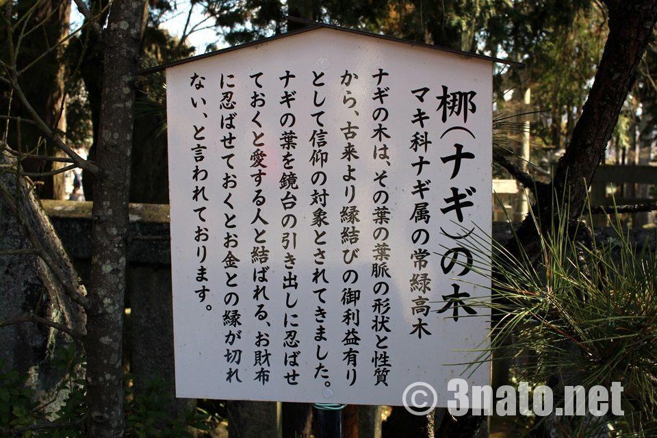 姫亀神社(ひめき)梛の木