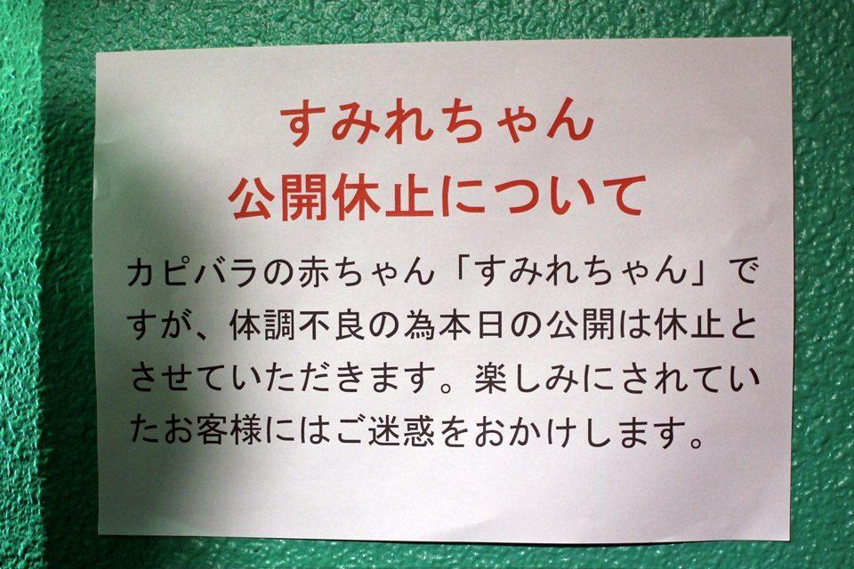 竹島水族館 スミレちゃん公開休止について