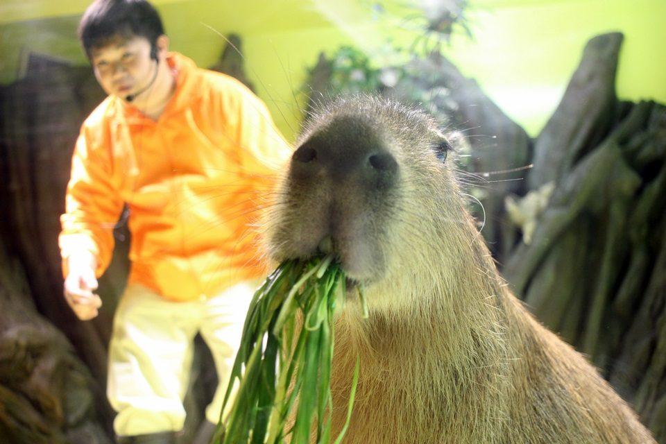 竹島水族館 たいようくん