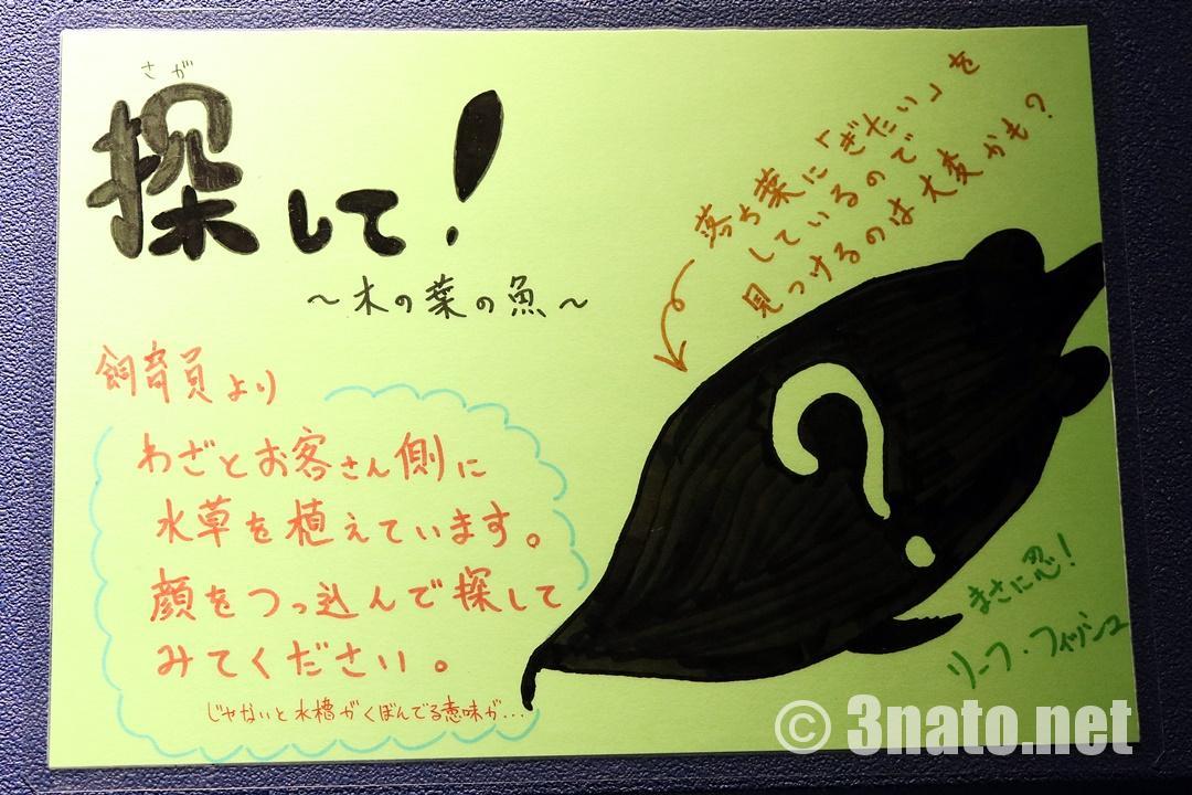 リーフフィッシュ展示について(竹島水族館)撮影日:2018/11/14