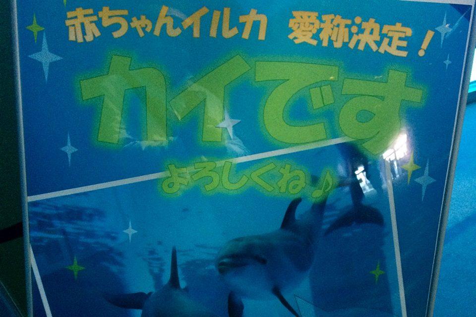 名古屋港水族館 カイと愛称決定