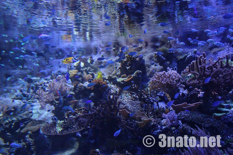 名古屋港水族館 ライブコーラル水槽